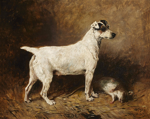 Art Prints of Zoe, a Fox Terrier, 1896 by John Emms
