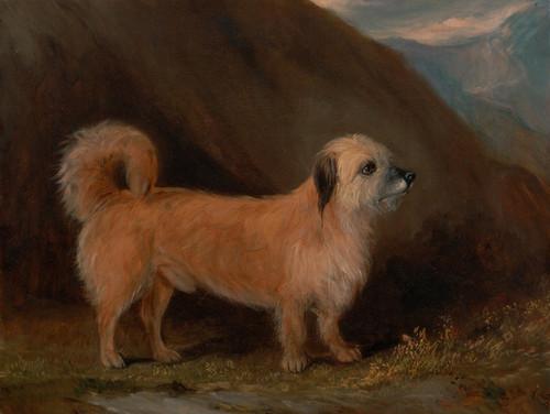 Art Prints of Dandie Dinmont Terrier by John Ferneley