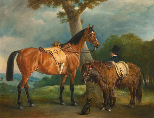 Art Prints of Lady Thorold's Hunter and Shetland Pony with Groom by John Ferneley