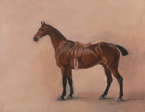 Art Prints of Study of a Saddled Bay Hunter by John Ferneley