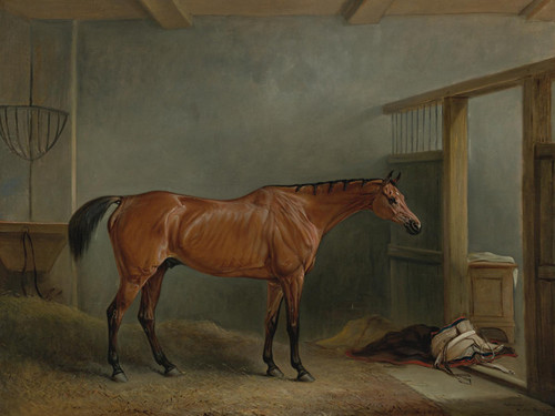 Art Prints of The Shaver, Favorite Hunter of Mr. Sterling Crawford by John Ferneley