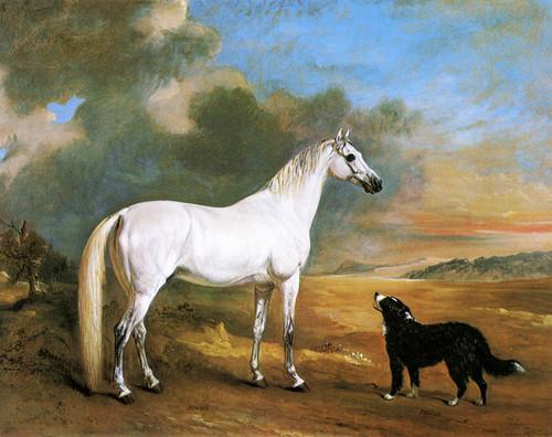 Art Prints of Mr. C. Turners Arab Bijoux, and Dog Pheobe by John Ferneley