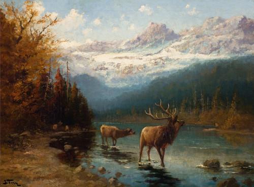 Art Prints of Glacier Elk by John Fery
