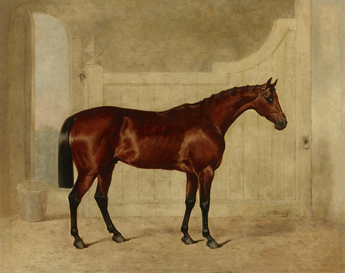 Art Prints of A Bay Horse in a Stable by John Frederick Herring