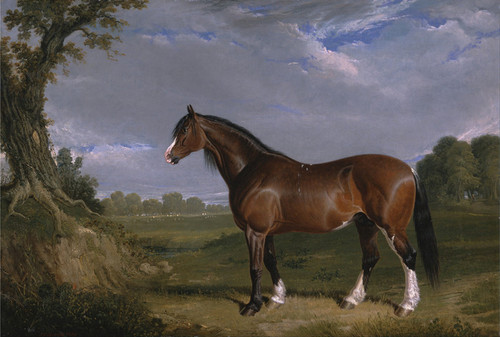 Art Prints of A Clydesdale Stallion by John Frederick Herring