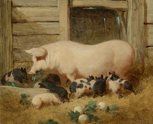 Art Prints of A Sow and Her Litter by John Frederick Herring