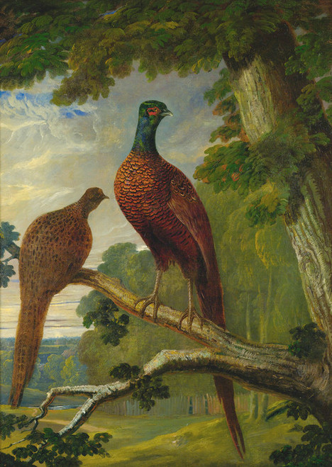 Art Prints of A Pheasant Cock and Hen by John Frederick Herring