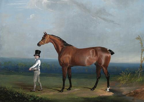 Art Prints of Bay Hunter of William Hatfield by John Frederick Herring