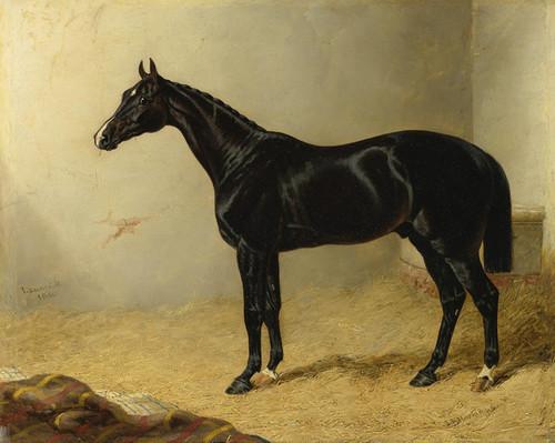 Art Prints of Launcelot by John Frederick Herring