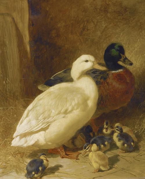 Art Prints of Ducks and Duckling by John Frederick Herring