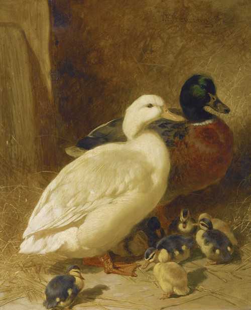 Art Prints of Ducks and Duckling by John Frederick Herring