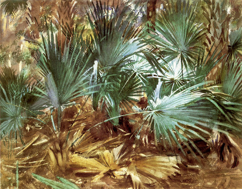 Art Prints of Palmettos or Palms by John Singer Sargent