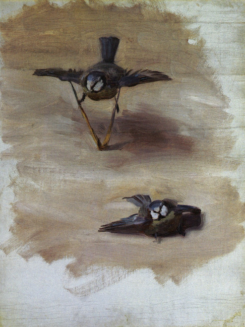 Art Prints of Two Studies of a Bluebird by John Singer Sargent