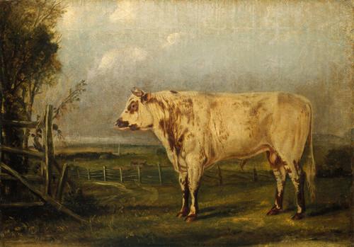 Art Prints of A Young Bull by John Woodhouse Audubon