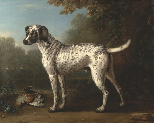 Art Prints of A Grey Spotted Hound by John Wootton