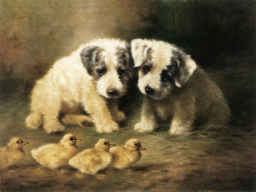 Art Prints of Sealyham Puppies and Ducklings by Lilian Cheviot