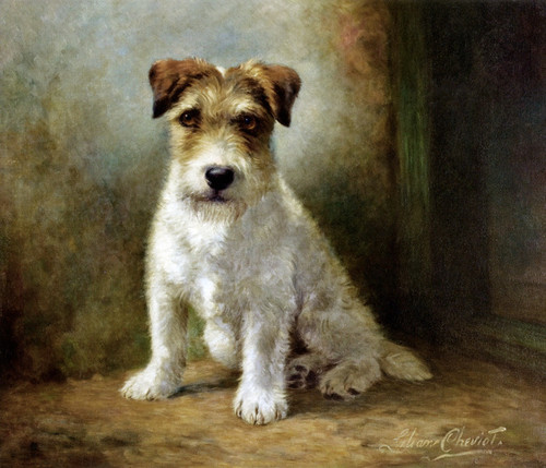 Art Prints of Seated Wire Haired Fox Terrier by Lilian Cheviot