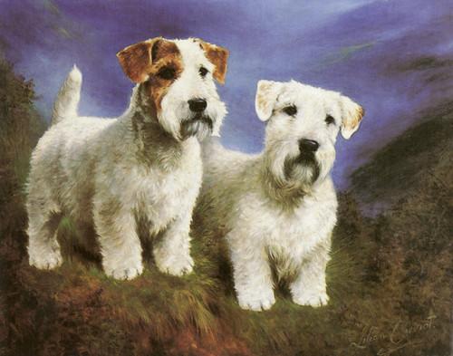 Art Prints of Sealyham Terrier, Head Studies by Lilian Cheviot