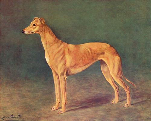 Art Prints of The Greyhound Bitch by Lilian Cheviot
