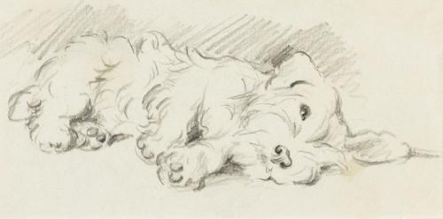 Art Prints of A Sealyham by Lucy Dawson