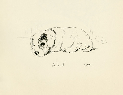 Art Prints of Albert by Lucy Dawson