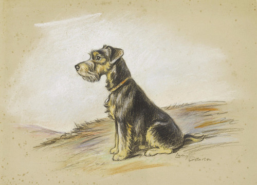 Art Prints of A Lakeland Terrier by Lucy Dawson