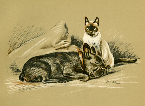 Art Prints of Berbay's Lad and the Siamese Cat by Lucy Dawson