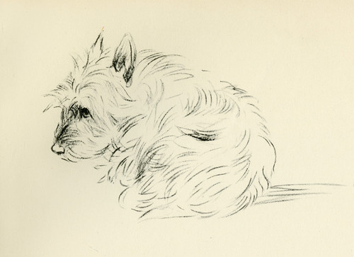 Art Prints of Binkie III by Lucy Dawson
