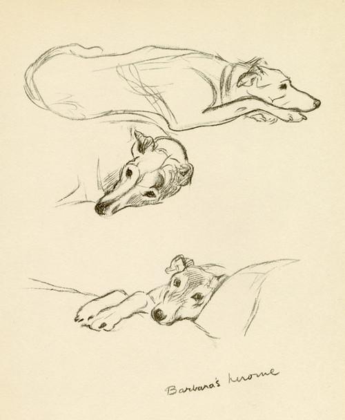 Art Prints of Barbara's Heroine, Greyhound by Lucy Dawson