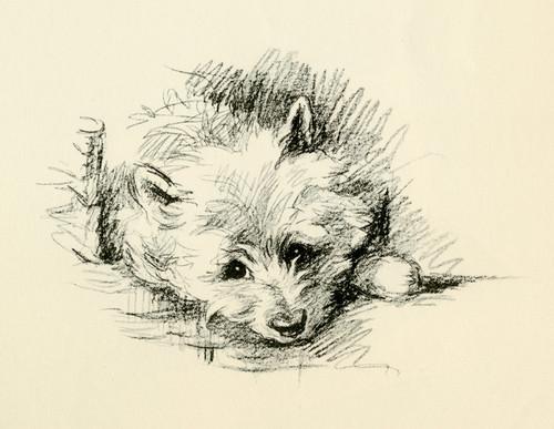 Art Prints of Binkie 2 by Lucy Dawson