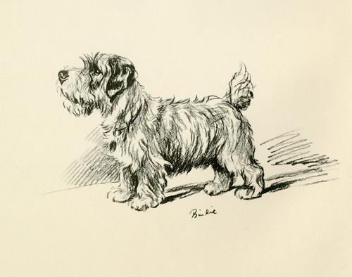 Art Prints of Binkie by Lucy Dawson