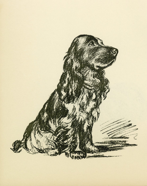 Art Prints of Black Cocker Spaniel by Lucy Dawson