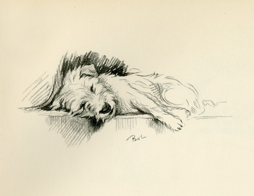 Art Prints of Bob Sleeping by Lucy Dawson