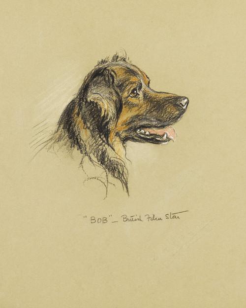 Art Prints of Bob British Film Star, a Shepherd by Lucy Dawson