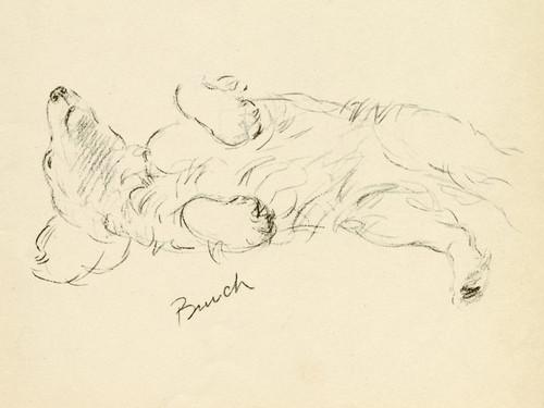 Art Prints of Bunch, Sealyham by Lucy Dawson