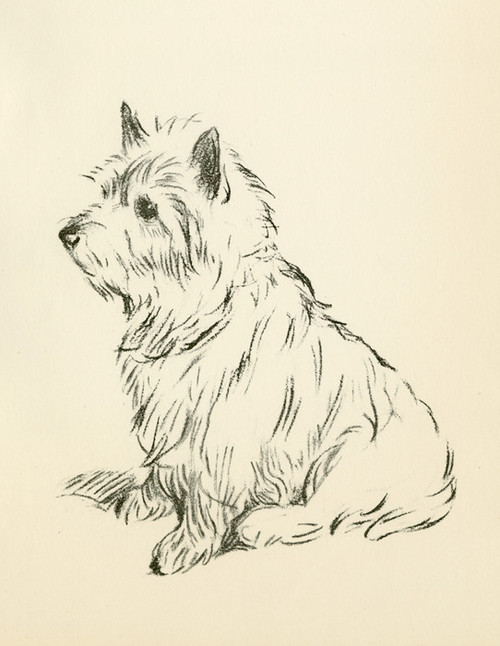 Art Prints of Cairn Terrier by Lucy Dawson