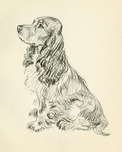 Art Prints of Cocker Spaniel by Lucy Dawson