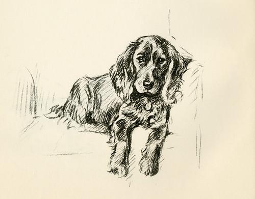 Art Prints of Cocker Spaniel in a Chair by Lucy Dawson
