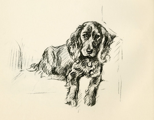 Art Prints of Cocker Spaniel in a Chair by Lucy Dawson