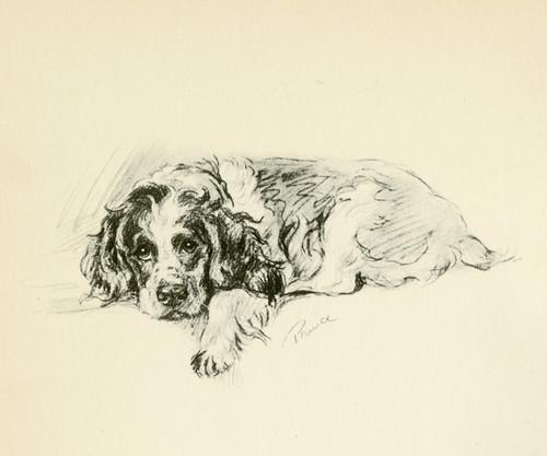 Art Prints of Cocker Spaniel, Prince by Lucy Dawson