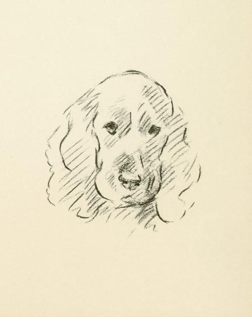 Art Prints of Cocker Spaniel II by Lucy Dawson