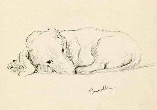 Art Prints of Dachshund, Snoodle by Lucy Dawson