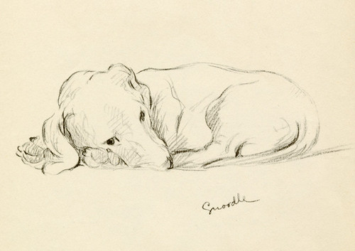 Art Prints of Dachshund, Snoodle by Lucy Dawson