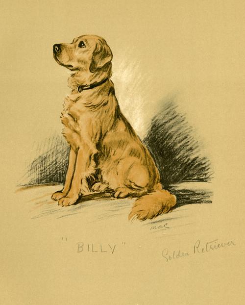 Art Prints of Golden Retriever, Billy by Lucy Dawson