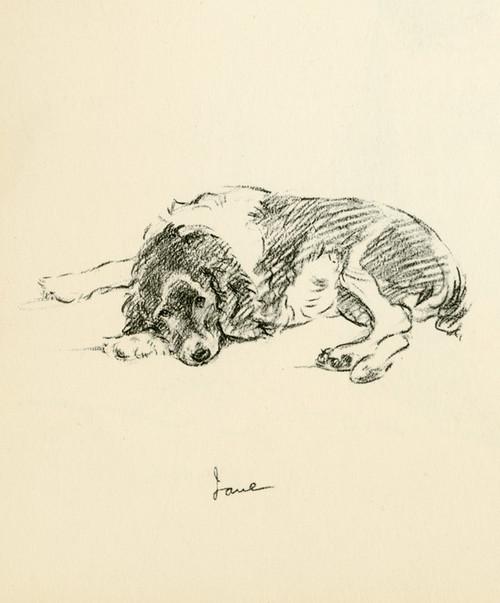 Art Prints of Jane by Lucy Dawson