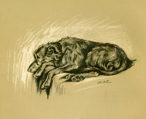 Art Prints of Irish Wolfhound by Lucy Dawson