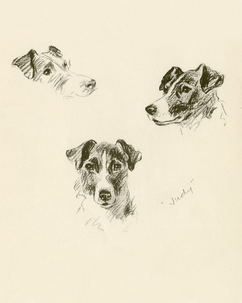 Art Prints of Judy, Smooth Haired Terrier by Lucy Dawson