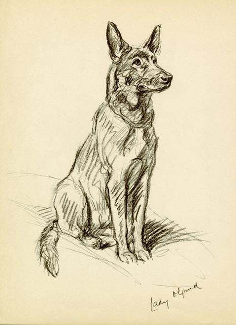 Art Prints of Lady Olfina, German Shepherd by Lucy Dawson