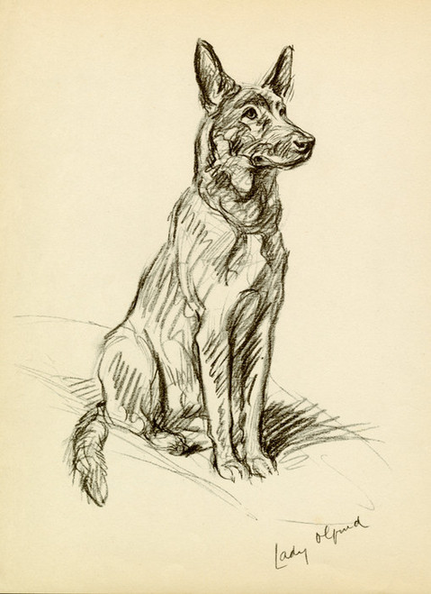 Art Prints of Lady Olfina, German Shepherd by Lucy Dawson