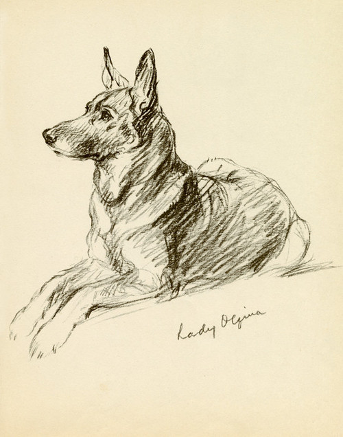 Art Prints of Lady Olfina, Sitting German Shepherd by Lucy Dawson